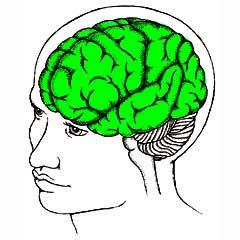 hersenen bij dementie